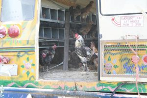 Grant_Farm_Chicken_Bus