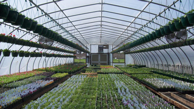 Getting your Greenhouse Groove on Gaia (Mother Earth) Grows is a sustainable living, gardening, and farming column.