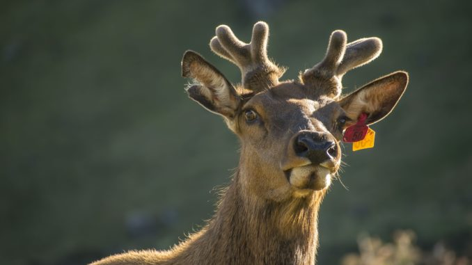 Colorado Parks and Wildlife preparing for leftover license sales beginning August 6