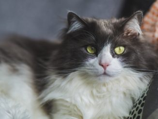 The Larimer County Department of Health and Environment (LCDHE) has learned that a cat recently tested positive for rabies in Fort Collins. This cat was found near the area of Laurel and Mathews street, just east of Colorado State University. The cat was a solid grey younger cat, and people potentiallymight have been in contact with it in the nearby area.