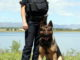 Larimer County Sheriff's Office K9