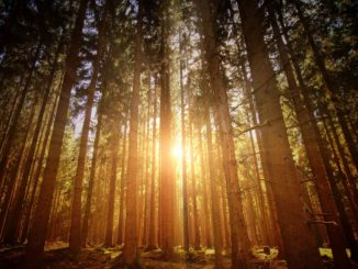 With the coming of the winter heating season, the Colorado State Forest Service is debuting a new tool to help builders make new buildings more climate-conscious and less dependent on non-renewable sources of energy.